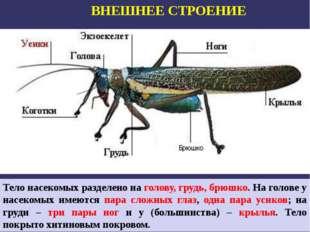 ВНЕШНЕЕ СТРОЕНИЕ Тело насекомых разделено на голову, грудь, брюшко. На голове