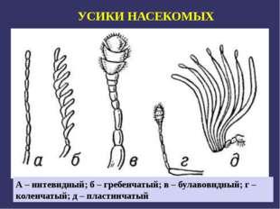 А – нитевидный; б – гребенчатый; в – булавовидный; г – коленчатый; д – пласти