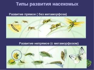 Типы развития насекомых Развитие прямое ( без метаморфоза) Развитие непрямое
