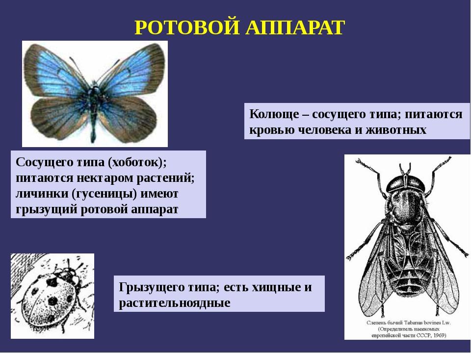 РОТОВОЙ АППАРАТ Грызущего типа; есть хищные и растительноядные Сосущего типа...