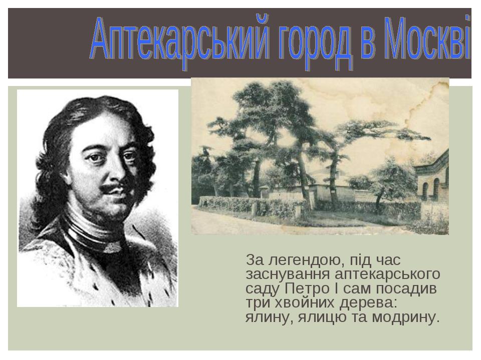 За легендою, під час заснування аптекарського саду Петро І сам посадив три хв...