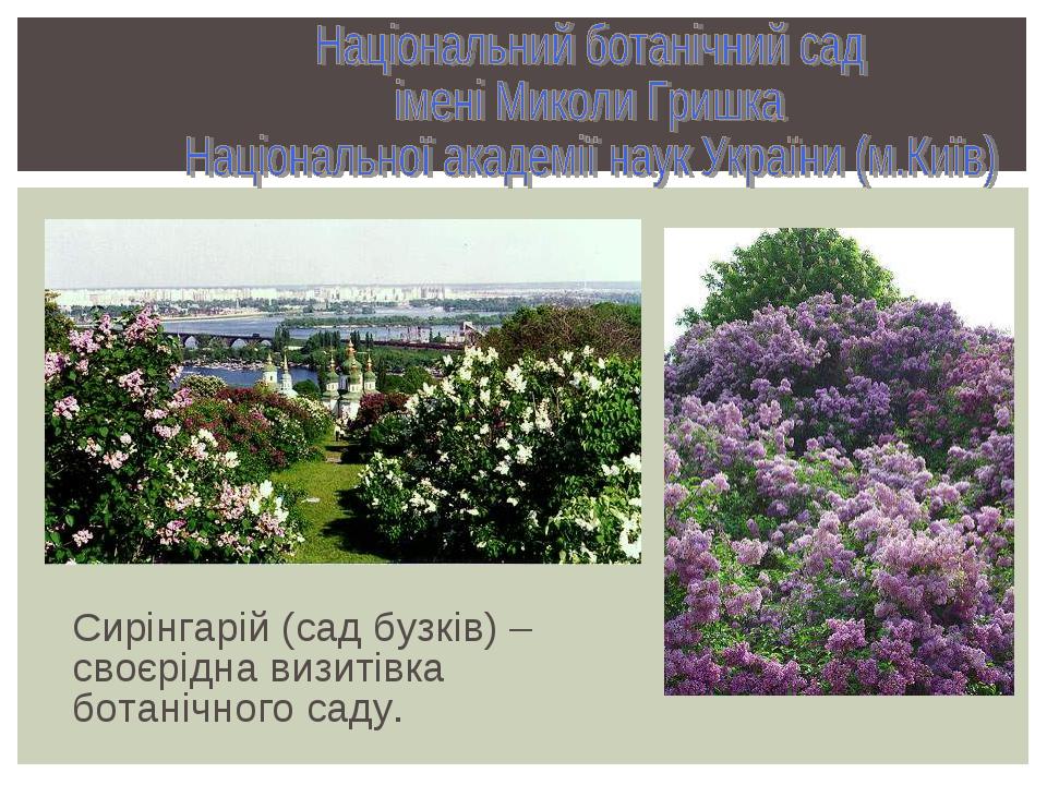 Сирінгарій (сад бузків) – своєрідна визитівка ботанічного саду.