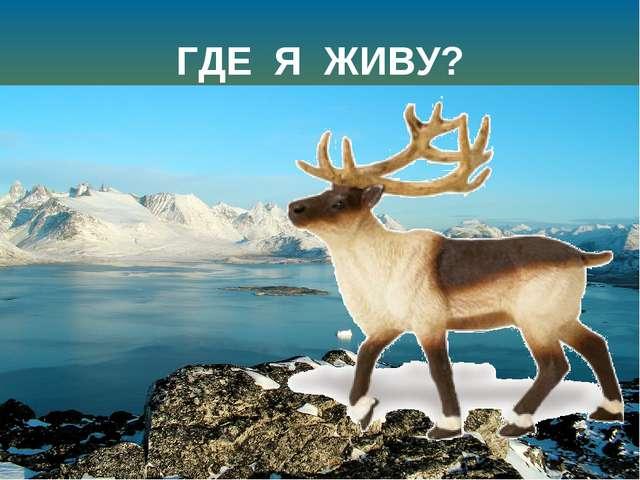 ГДЕ Я ЖИВУ? Далеко, мои друзья, Где тайга кончается, Есть полярные края – Тун...