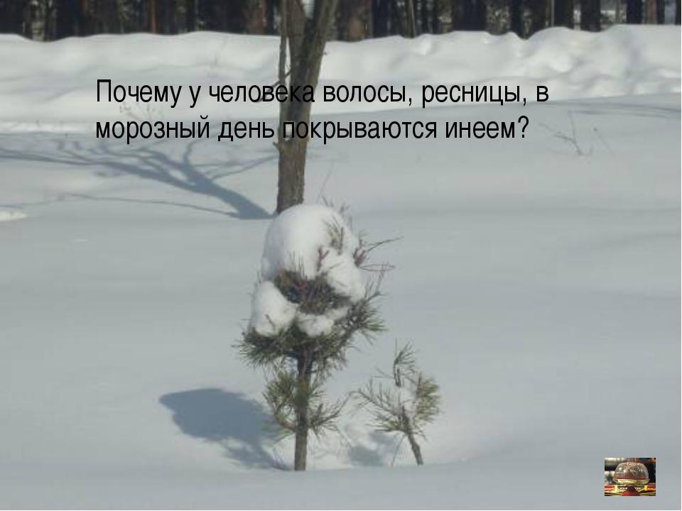 Почему у человека волосы, ресницы, в морозный день покрываются инеем?