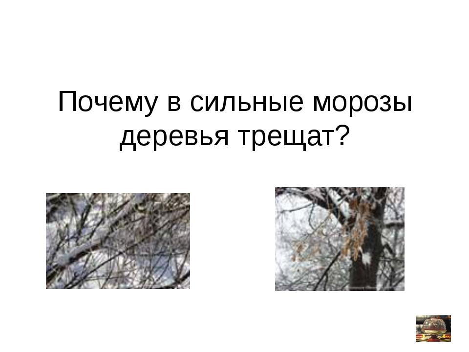 Почему в сильные морозы деревья трещат?