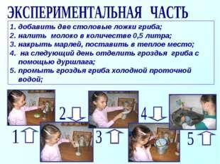 добавить две столовые ложки гриба; налить молоко в количестве 0,5 литра; накр