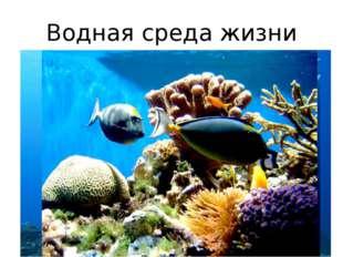 Водная среда жизни