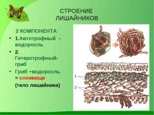 СТРОЕНИЕ ЛИШАЙНИКОВ 2 КОМПОНЕНТА 1.Автотрофный – водоросль 2. Гетеротрофный-