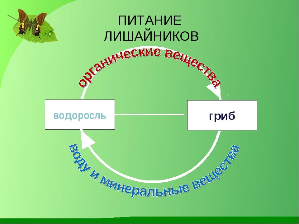 Презентация Лишайники 5 Класс