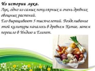 Из истории лука. Лук, одно из самых популярных и очень древних овощных растен