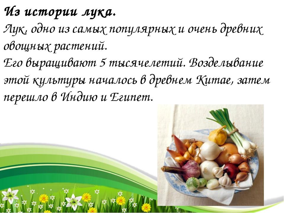 Из истории лука. Лук, одно из самых популярных и очень древних овощных растен...