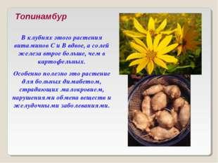 Топинамбур В клубнях этого растения витаминов С и В вдвое, а солей железа втр