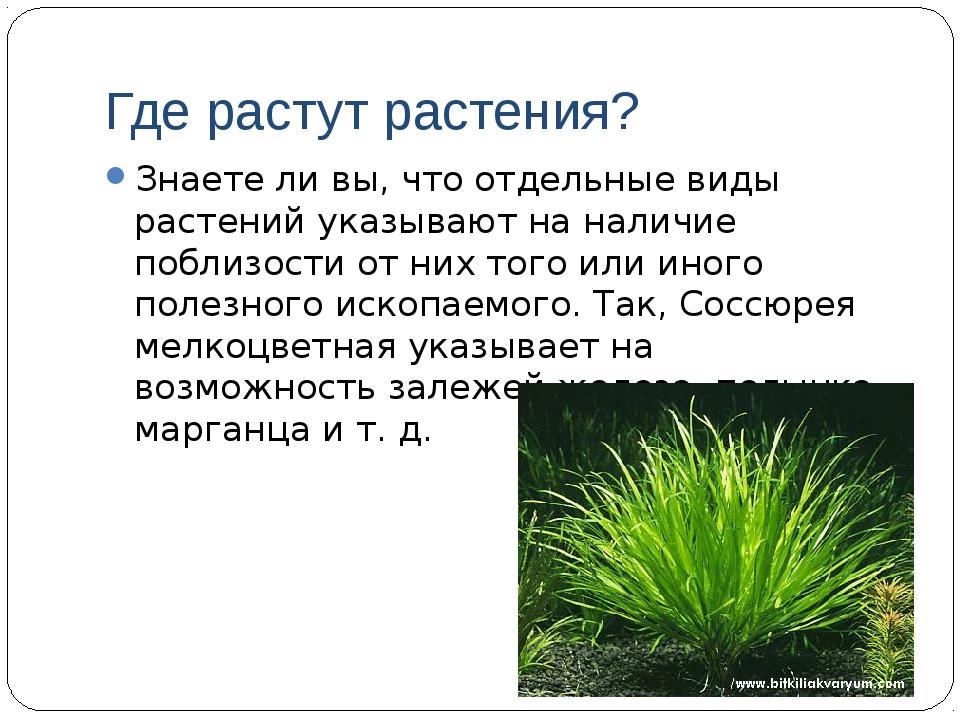 Где растут растения? Знаете ли вы, что отдельные виды растений указывают на н...