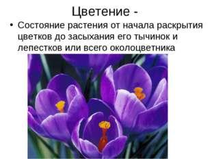 Цветение - Состояние растения от начала раскрытия цветков до засыхания его ты