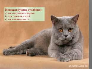 Кошкам нужны столбики: а) как спортивные снаряды б) для точки их когтей в) к