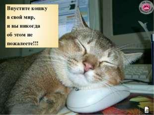 Впустите кошку в свой мир, и вы никогда об этом не пожалеете!!!