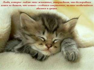 Люди, которые любят этих животных, утверждают, что беспородных кошек не бывае