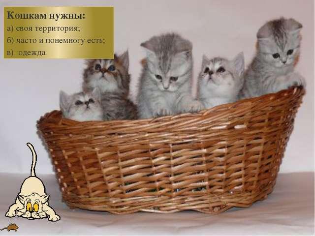Кошкам нужны: а) своя территория; б) часто и понемногу есть; в) одежда