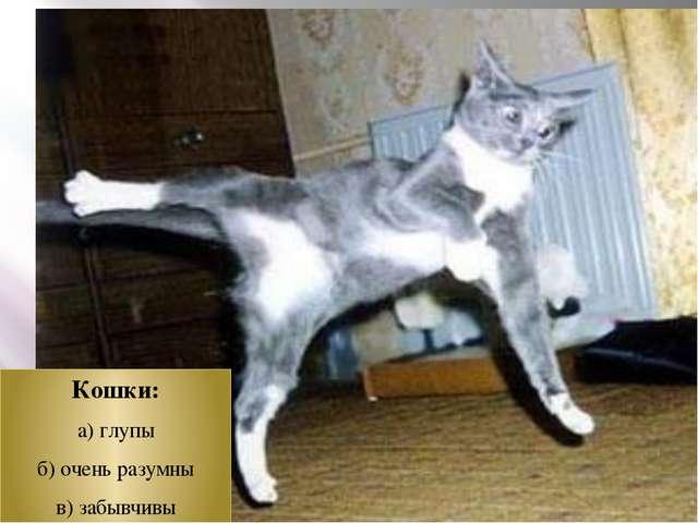 Кошки: а) глупы б) очень разумны в) забывчивы