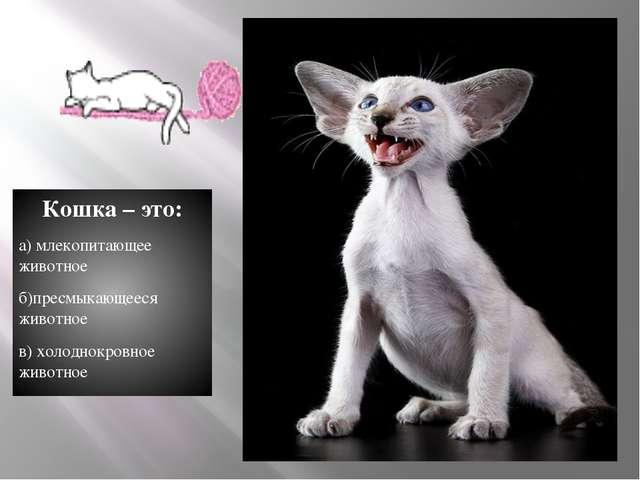 Кошка – это: а) млекопитающее животное б)пресмыкающееся животное в) холоднокр...