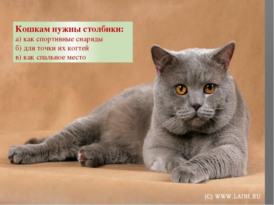 Кошкам нужны столбики: а) как спортивные снаряды б) для точки их когтей в) к...