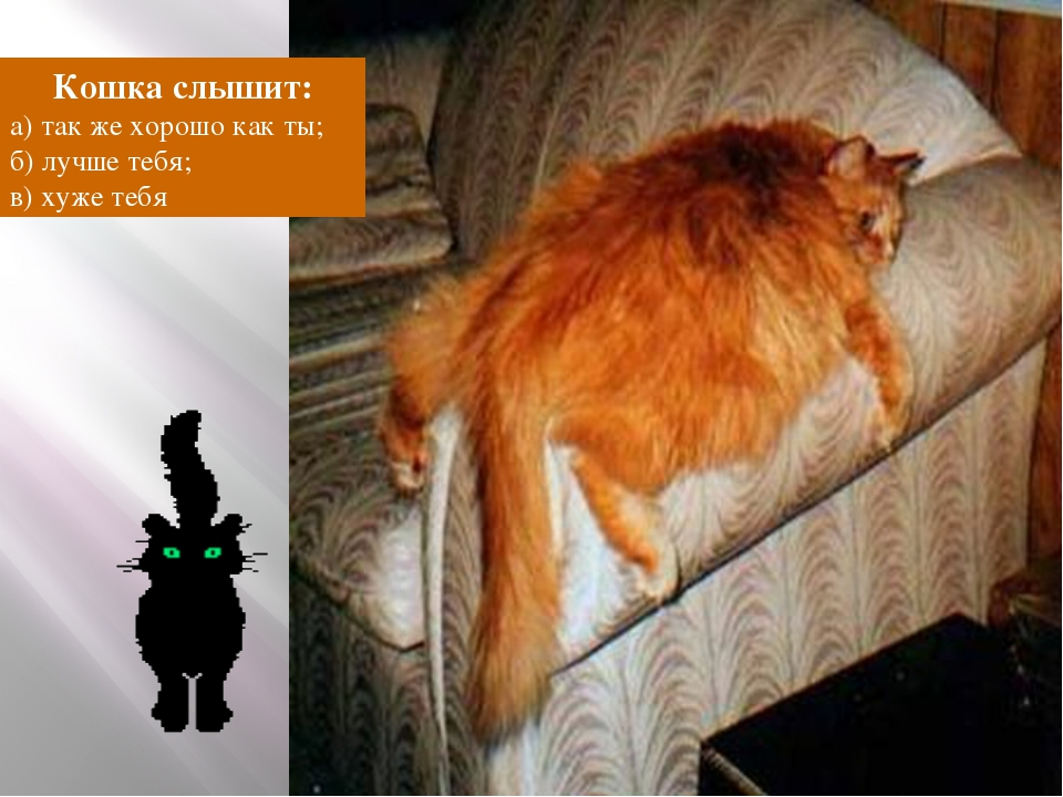 Кошка слышит: а) так же хорошо как ты; б) лучше тебя; в) хуже тебя