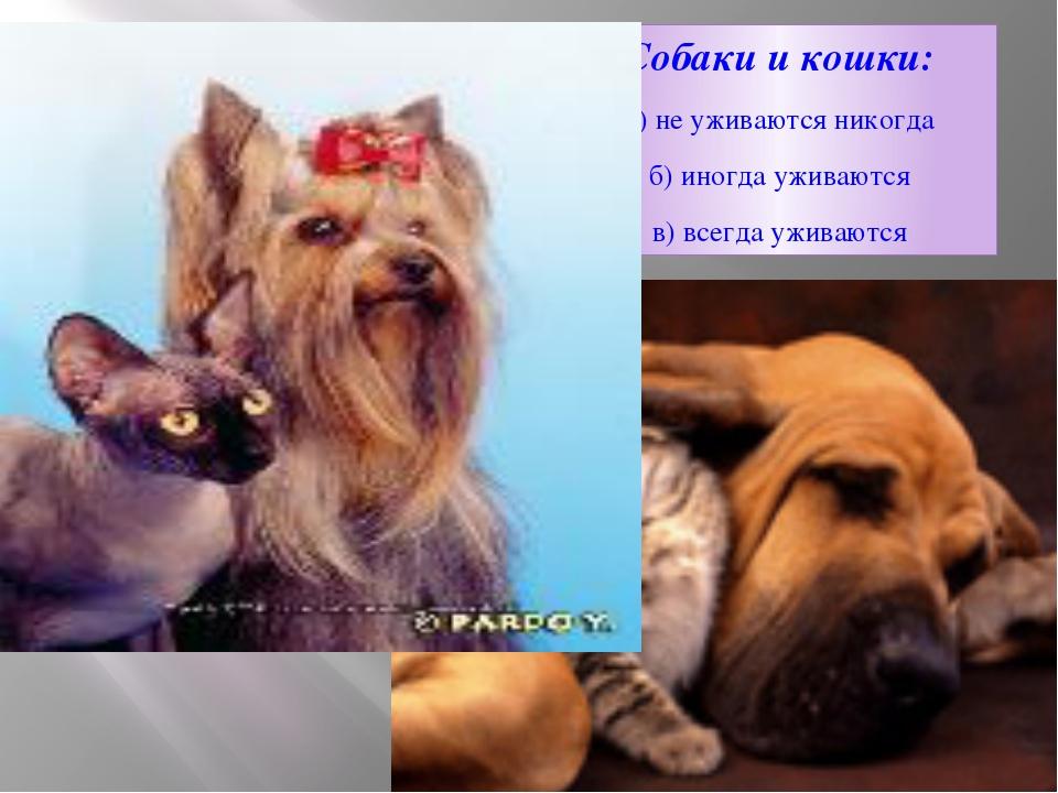 Собаки и кошки: а) не уживаются никогда б) иногда уживаются в) всегда уживаются