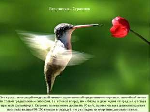 Вес птички – 7 граммов Эта кроха – настоящий воздушный гимнаст, единственный