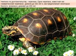 Чемпион по долгожительству - черепаха. Одна черепаха, известная как «мавритан