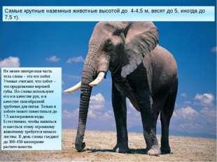 Самые крупные наземные животные высотой до 4-4,5 м, весят до 5, иногда до 7,5