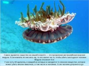 Самое ядовитое существо на нашей планете — это прозрачная австралийская морск