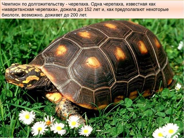 Чемпион по долгожительству - черепаха. Одна черепаха, известная как «мавритан...