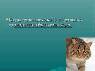Кавказские лесные кошки во многом похожи насредне европейских лесных кошек .