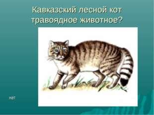 Кавказский лесной кот травоядное животное? нет