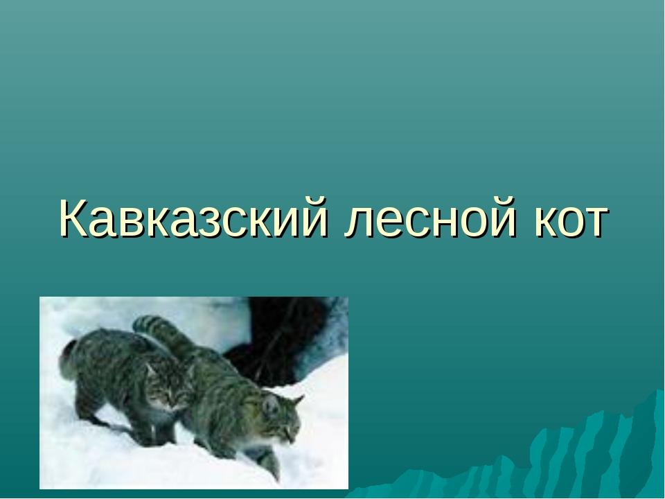 Кавказский лесной кот