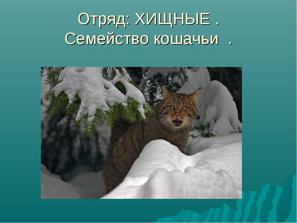 Отряд: ХИЩНЫЕ . Семейство кошачьи .