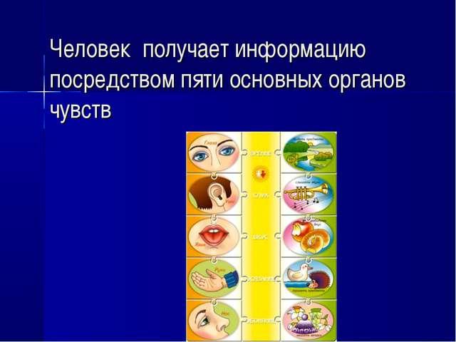 Человек получает информацию посредством пяти основных органов чувств