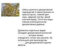 Клёны ценятся в декоративном садоводстве и паркостроении за красоту кроны, з