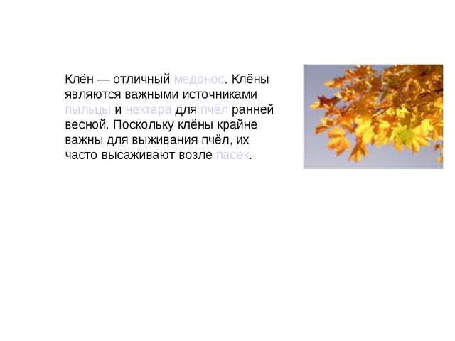 Клён— отличныймедонос. Клёны являются важными источникамипыльцыинектара...