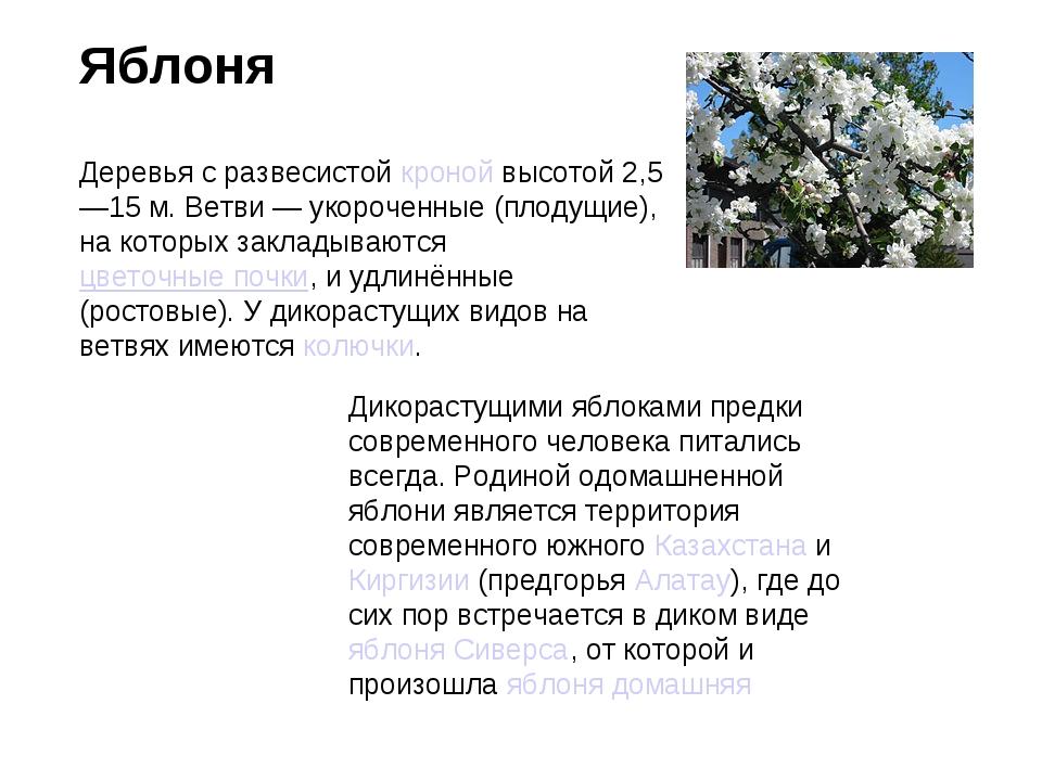 Яблоня Деревья с развесистойкронойвысотой 2,5—15м. Ветви— укороченные (пл...
