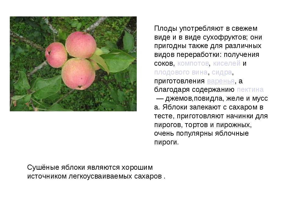 Плоды употребляют в свежем виде и в виде сухофруктов; они пригодны также для...