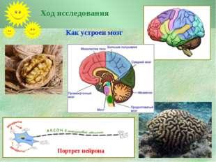 Как устроен мозг Ход исследования