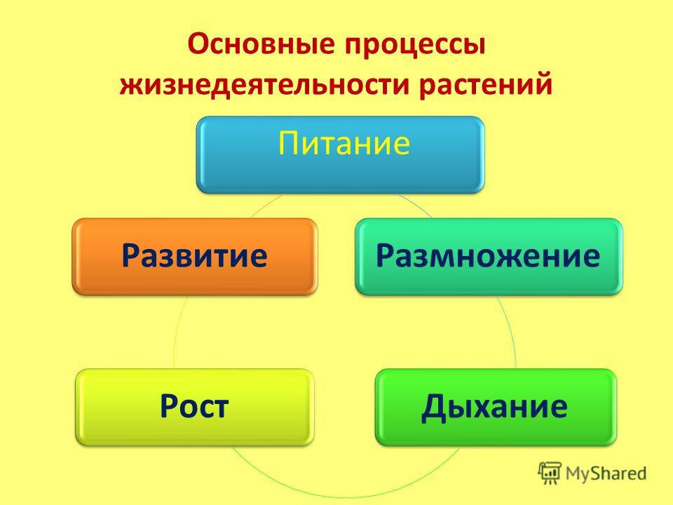 http://images.myshared.ru/440050/slide_6.jpg