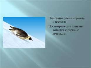 Пингвины очень игривые и веселые! Посмотрите как пингвин катается с горки- с