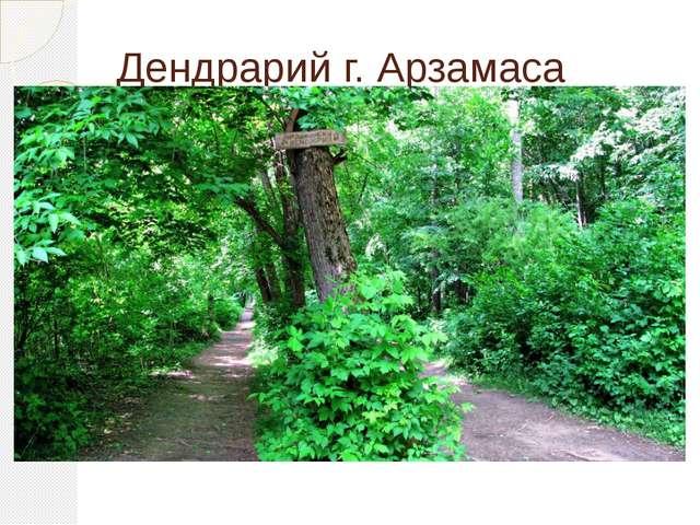 Дендрарий г. Арзамаса