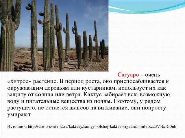 САГУАРО Сагуаро – очень «хитрое» растение. В период роста, оно приспосабливае...