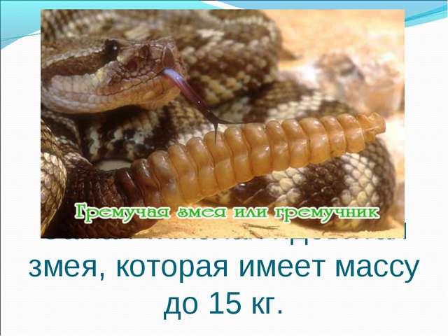 Самая тяжёлая ядовитая змея, которая имеет массу до 15 кг.