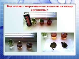 Как влияют энергетические напитки на живые организмы?