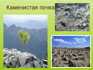 Каменистая почва