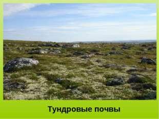 Тундровые почвы